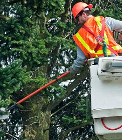 leo-brothers-tree-service